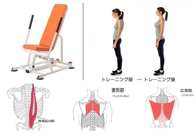 背筋群(菱形筋・広背筋・脊柱起立筋)を強化させ猫背を改善し美しい姿勢へ